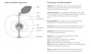 Apfelsorten_Franziska_Schmidt_Lena_Kösters_Ansicht3